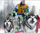 5 и 6 февраля 2011 г. в Токсово состоится Чемпионат России по ездовому спорту